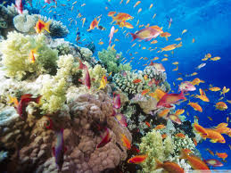 https://www.egyptravel4you.com/wp-content/uploads/2015/04/red-sea-1.jpg